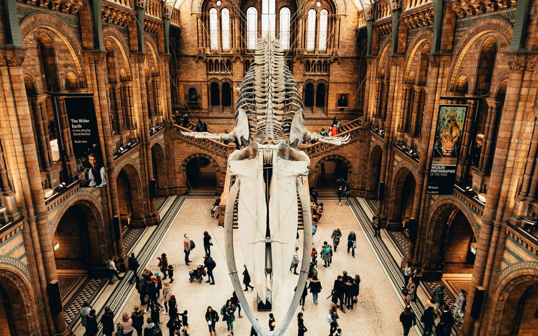 How Museum Education Cultivates Critical Thinking – Part II